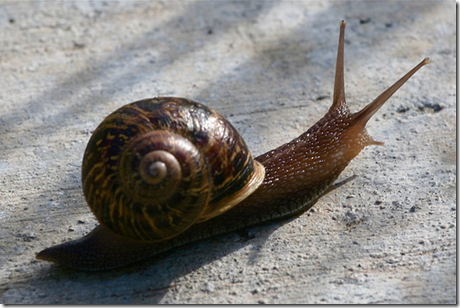 Organic Snail and Slug Pest Control