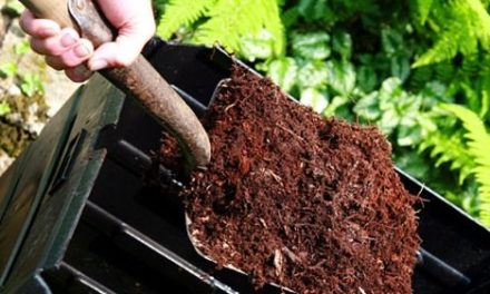 Composting and Other Ways to Reducing Food Waste
